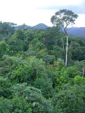 Тропический лес. Джунгли. Природа. Картины природы. Картинки. Изображения. Рисунки. Фотографии. Rainforest. Jungle. Forest. Wild nature. Pictures of nature. Photo.