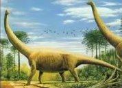 Вероятно, именно так выглядели австралийские зауроподы.  Динозавры. Палеонтология. Фото. Картинки. Изображения. Рисунки. Фотографии. Текст.  Sauropod. Dinosaurs. Palaeontology. Museum. Photo. Text. Species animals. Pictures.