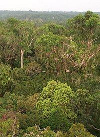 Тропический лес. Джунгли. Природа. Картины природы. Картинки. Изображения. Рисунки. Фотографии. Amazon forest. Rainforest. Jungle. Wild nature. Pictures of nature. Photo.